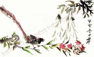 Long Tailed Bird